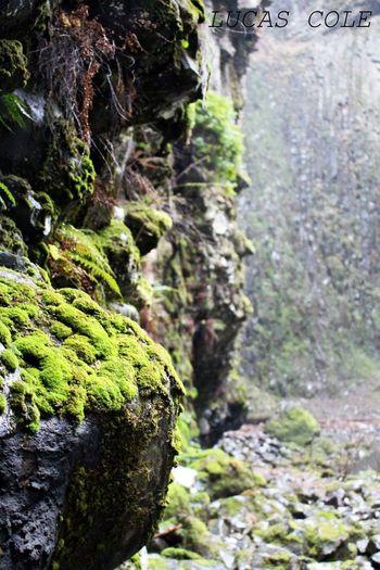 Cliffside Plant