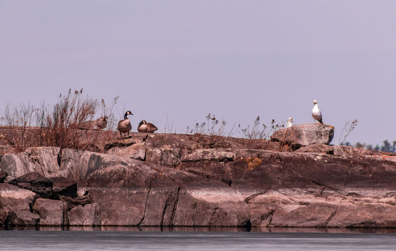 Seagulls perching on a rock
