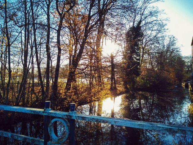 Schoonhoven November 2016 Tree Nature No People Reflection Beauty In Nature Sky Outdoors Water November Trees And Sky Trees Bridge Railing