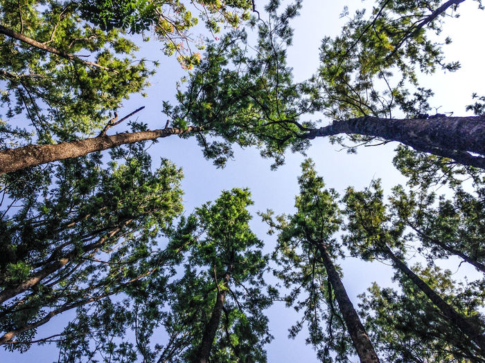 Beauty In Nature Blue Sky Branch Clear Sky Day Forest Growth High Low Angle View Nature No People Outdoors Scenics Sky Tranquility Tree Tree Trunk EyeEm Diversity Long Goodbye Place Of Heart Sommergefühle