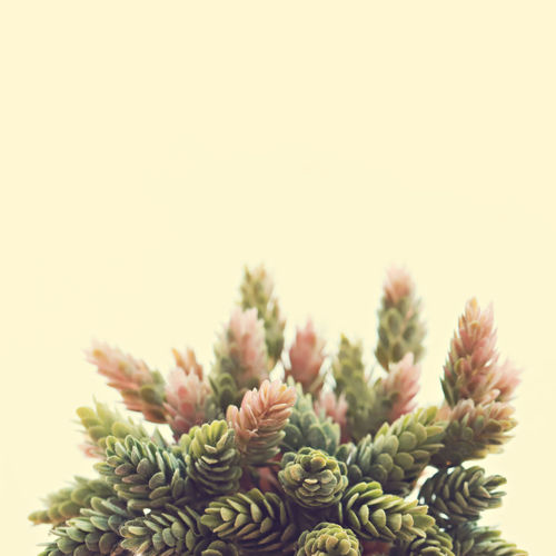 Artificial plant for decoration Cactus Copy Space Green Color Growth Nature Pastal Power Plant Beauty In Nature Botany Close-up Coniferous Tree Decoration Greenery Seletive Focus Still Life Succulent Plant