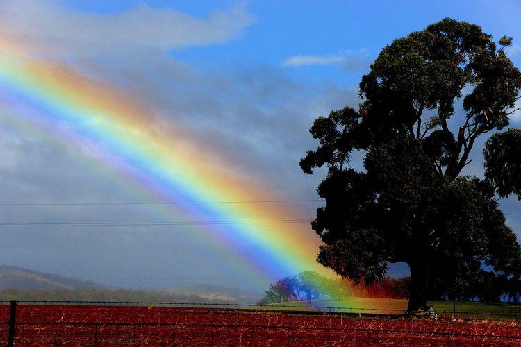 Beauty In Nature Cloud - Sky Landscape Multi Colored Nature No People Rainbow Sky Tree