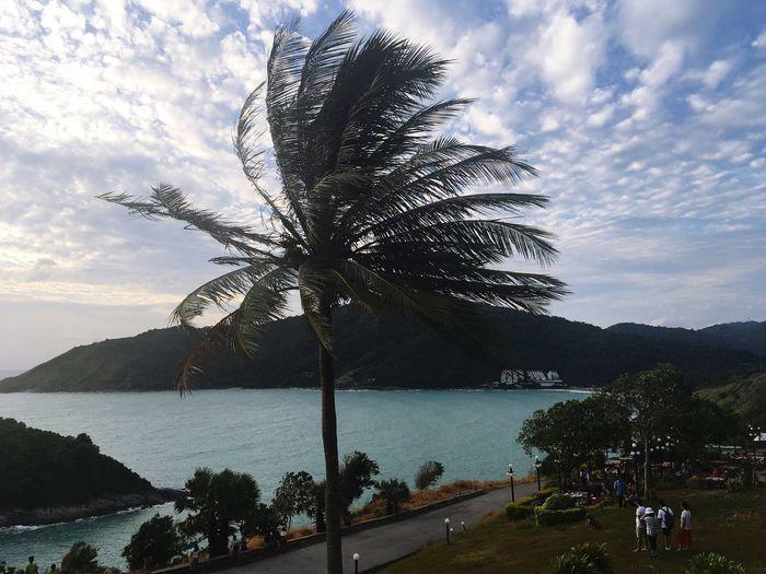 Sea Tree Sky