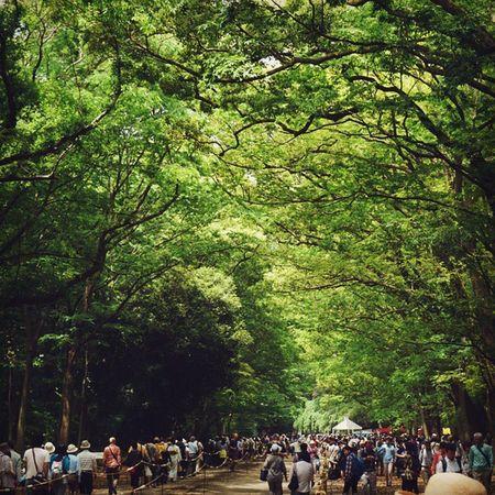 いつもは、一歩足を踏み入れた途端に周りの音がなくなって、鳥の歌う声だけが聞こえてくる糺の森。 昨日はとっても賑やかでした。 糺の森 Travelgram Kyoto Japan Greenery Spring 新緑 並木道 Nature 葵祭 Vscocam
