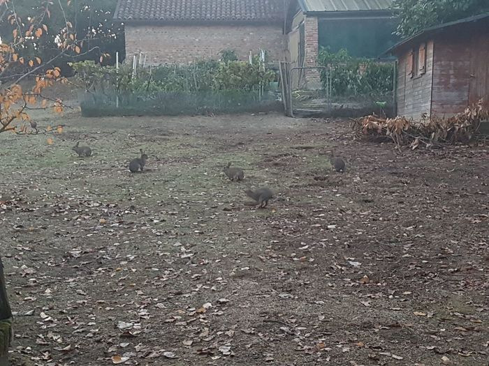 No People Day Outdoors Grass Nature Sky rabbits piemonte torino Italia Italy Turin Tourism Vacations Ancient Civilization History Travel Nature