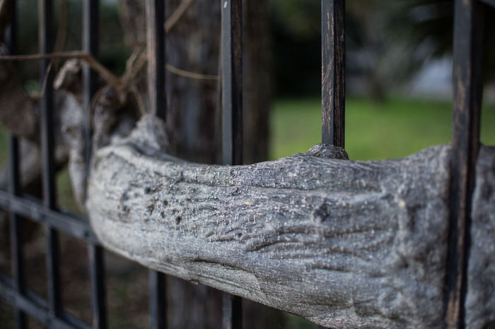 #Nature  #Plant #Wood #branches #closeup #fence #focusontheforeground #gate #growing #nopeople #outdoor #tree