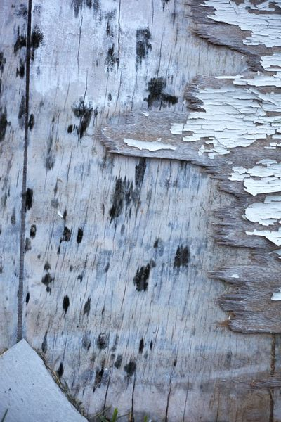 Abstract Photography Abstract, Mold Textured  Weathered Wood Wood Grain Grey Jagged Jagged Surfaces Mottled Mould Mouldy Pattern Peeling Paint Peeling Paintwork Rough Rough Surface Surface Texture Weathered Wood White Wood Surface Wood Texture Wooden Surface