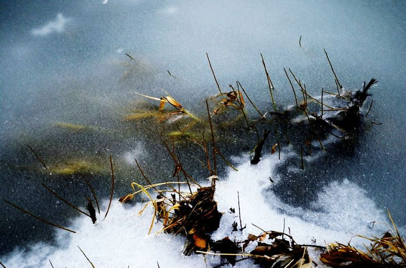Showcase: January Water Ice Winter Cold Minimalism Beautiful Frozen