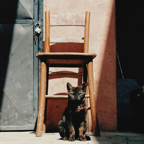 Portrait of cat sitting on chair