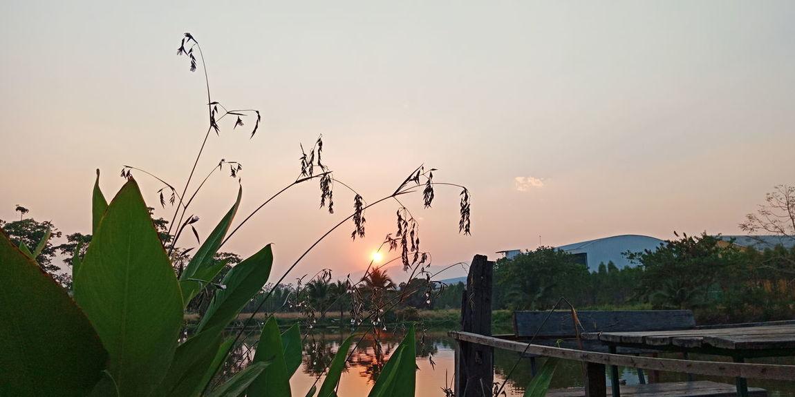 Bird Flying Tree Flock Of Birds Rural Scene Silhouette Dawn Sky Animal Themes Landscape