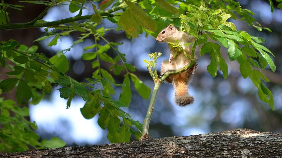 Branch Cute