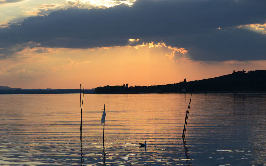 lakeview with a seagull swimming in foreground, at sunset Sunset Sunlight Sun Sunbeam Cloud - Sky Cloud Water Reflection Seagull Swimming Island Trasimenolake Umbria Italy Environment Beauty In Nature EyeEm Nature Lover Lakeview Scenics - Nature Sky Animal Wildlife Bird Silhouette Tranquility Animals In The Wild Tranquil Scene