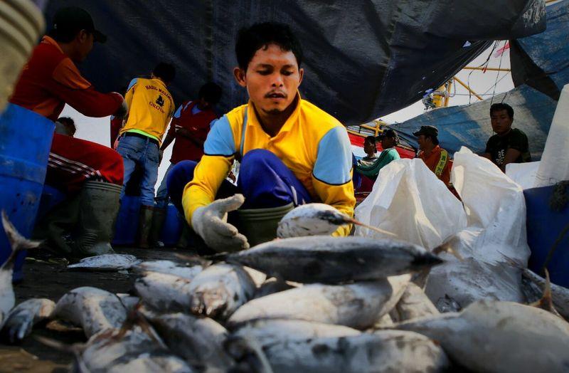 Indonesian Marine fish catches Sea Food Economic Photojournalism Photojoutnalist Huntingseason Fish Industry Fishing Industry
