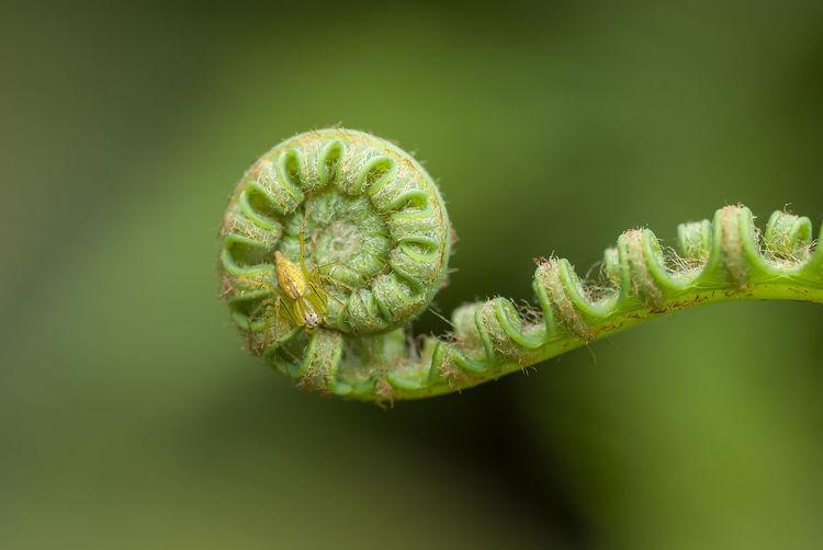 Close-up of fern bud