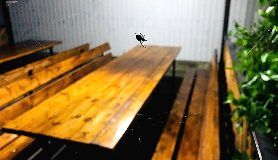Small spider One Animal Animal Nature Day Animals In The Wild Sunlight Window Animal Themes Architecture Invertebrate Glass - Material Insect Bird Shadow Animal Wildlife Flying Vertebrate Built Structure No People Outdoors