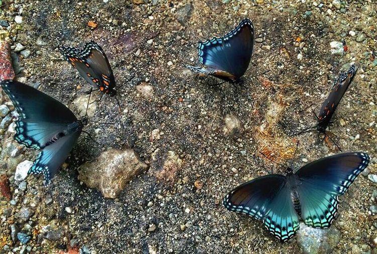 Family meeting Butterflies Butterflyporn