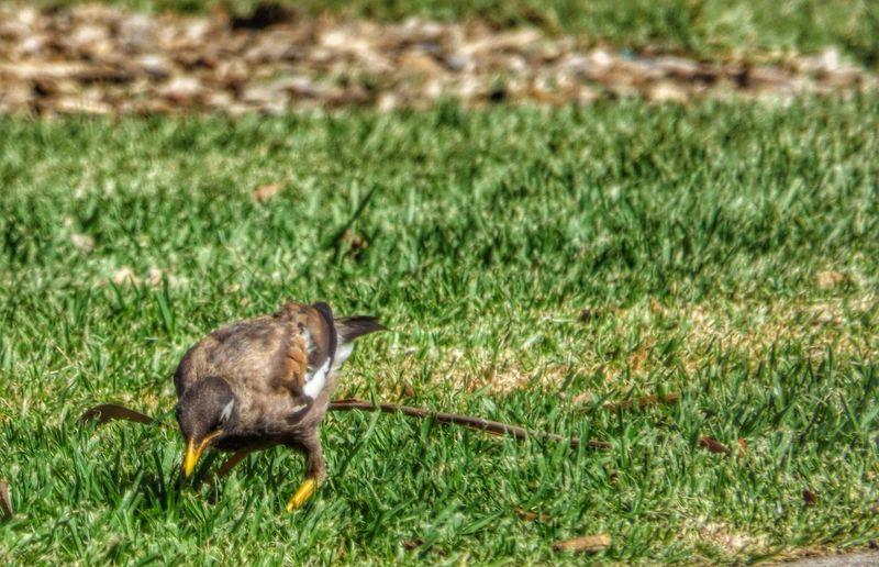 Birds Bird At The Park