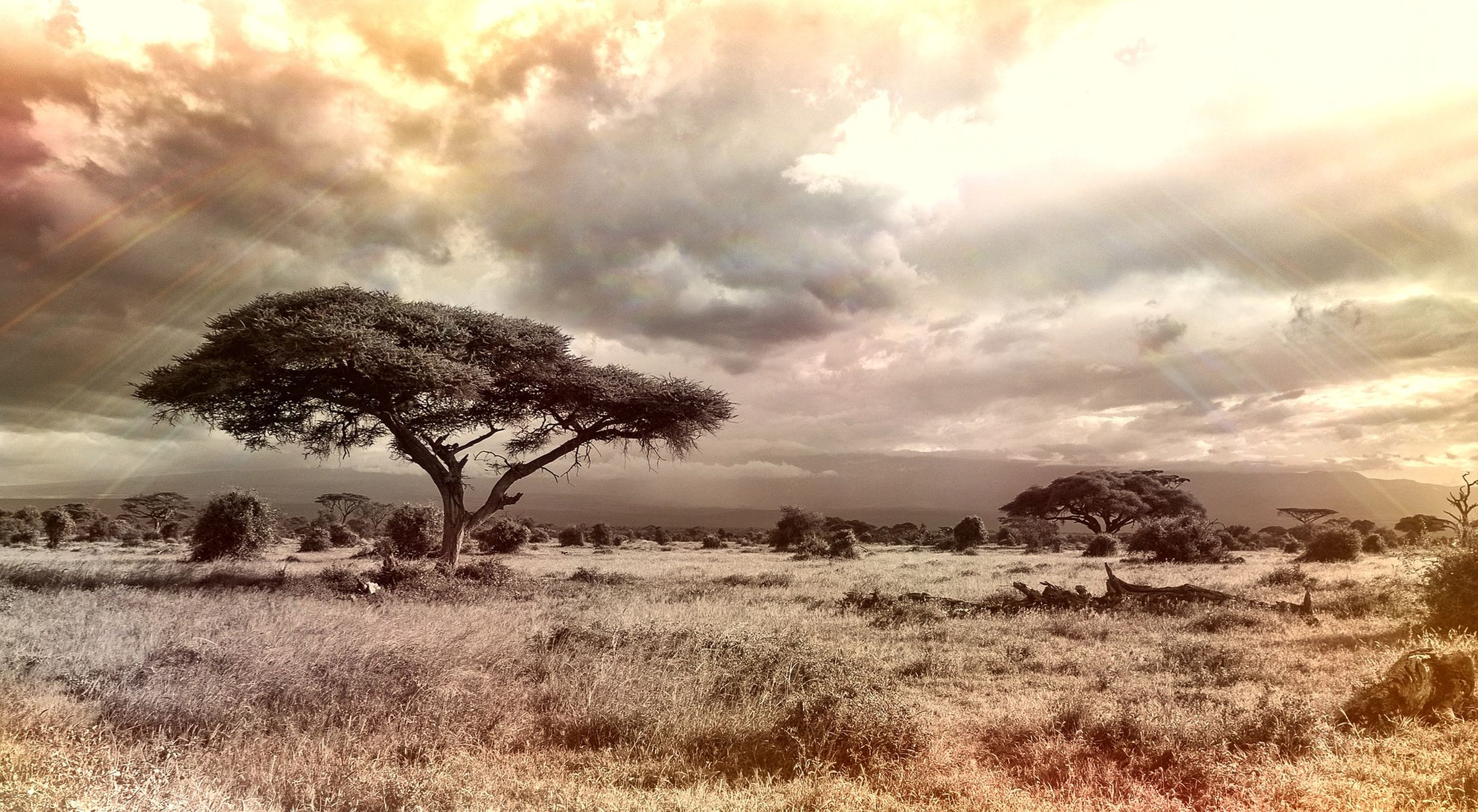 sky, tranquil scene, tranquility, landscape, tree, cloud - sky, scenics, beauty in nature, nature, cloudy, cloud, field, non-urban scene, bare tree, idyllic, growth, remote, sunset, horizon over land, grass