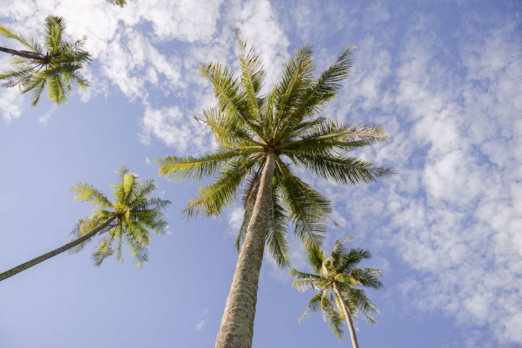 Tropical Climate Tree Palm Tree Sky Cloud - Sky Plant Nature Travel No People Coconut Palm Tree Holiday Land Travel Destinations Beauty In Nature