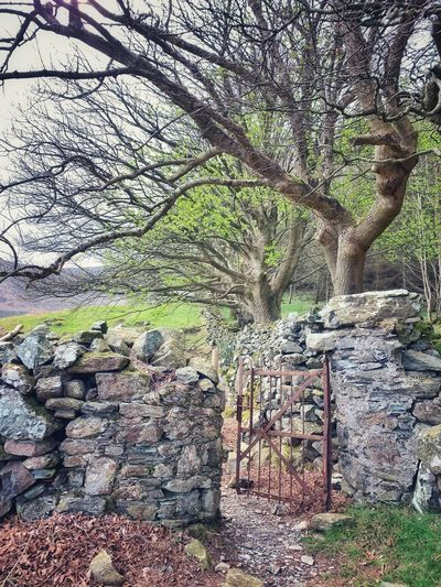 View of bare trees in the wall