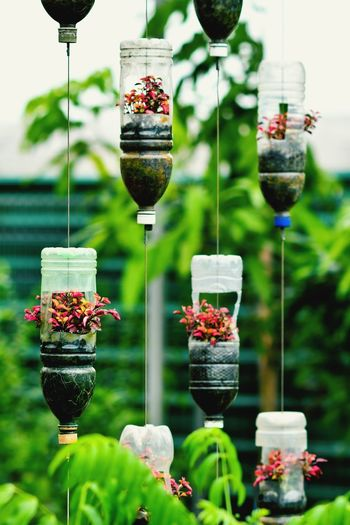 Recycle plastic bottles Plastic Bottle Plastic Recycling Recycling Recycled Materials Recycled Plastic Flower Red Hanging Plant Life End Plastic Pollution Plastic Environment - LIMEX IMAGINE