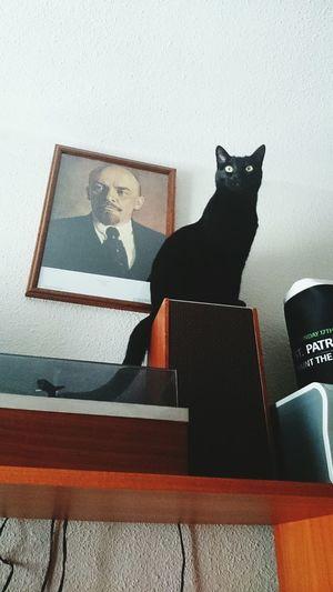 Lenin Cat Gato Negro