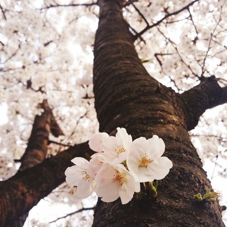 Colorful Backtospring Cherry Blossoms MySchool Tree Flowers Back to spring🌸