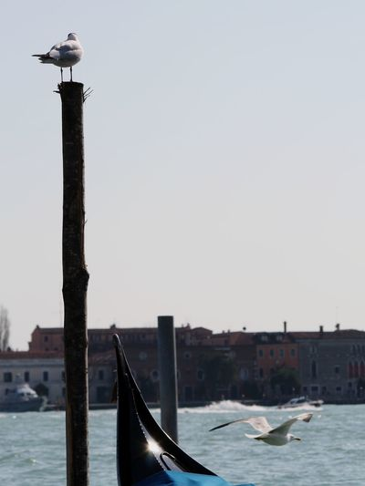 Seagull perching on wooden post in canal