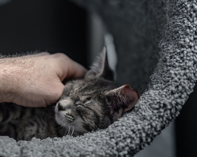 Cropped hand of man stroking sleeping cat at home
