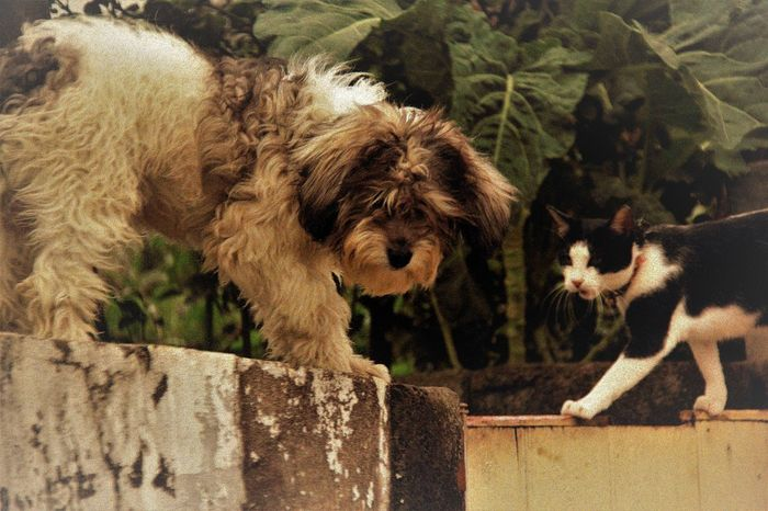 Animal Themes Cat And Dog Chance Encounters Day Domestic Animals Fluffy Dog Friendship High Angle View Looking At Camera Mammal Nature No People On The Walls Outdoors Adapted To The City