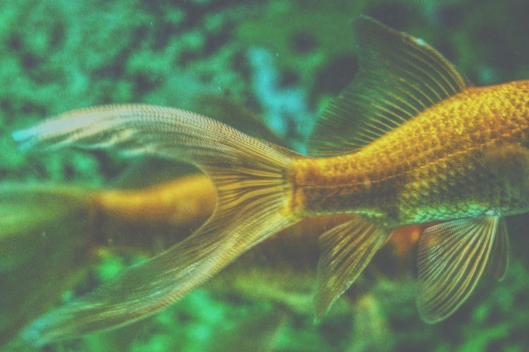 Close-Up Of Fish In Tank At Aquarium