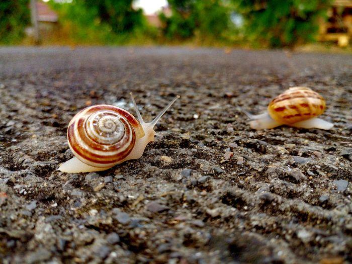 Salyangoz Salyangozlar Snail Snail🐌 Snail Collection The Great Outdoors - 2017 EyeEm Awards