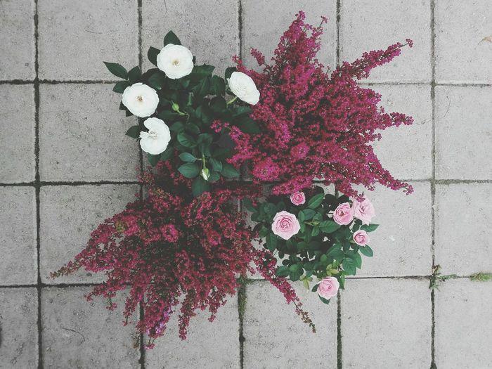 Roses & Erica