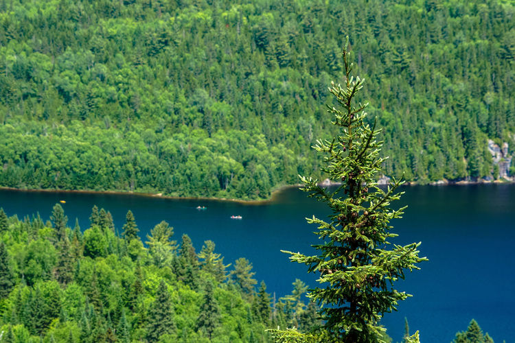 Beauty In Nature Canada Day Green Green Color Growth Idyllic Lake Landscape Lush Foliage Mountains Nationalpark Nature Non-urban Scene Park Plant Quebec Remote Scenics Sky Tranquil Scene Tranquility Tree Trees Water