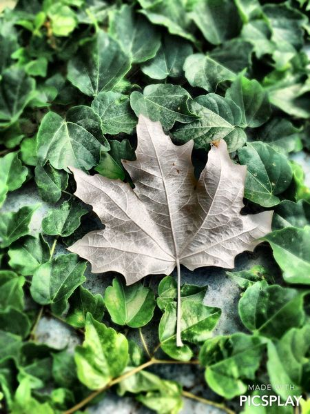 Sonbahar..🍁🍁 Autumn