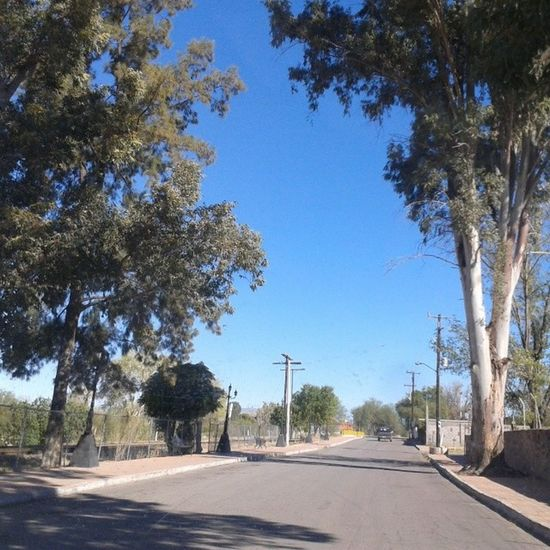 Magdalenadekino Sonora ShoutOut Skyline street trees pueblomágico weekend december