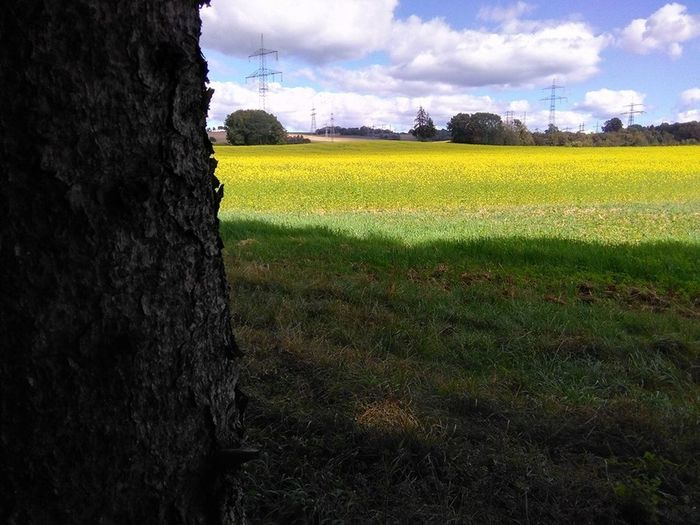 Agriculture Beauty In Nature Cloud - Sky Farm Field Growth Landscape Nature Rural Scene Sky Tree