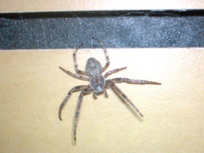 Spider Close-up Nature