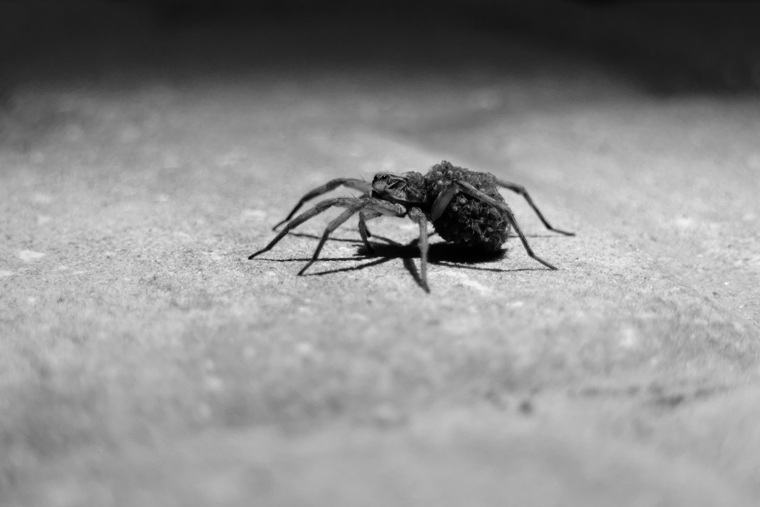 invertebrate, animal, animal themes, animal wildlife, animals in the wild, one animal, insect, selective focus, close-up, fly, no people, day, zoology, animal body part, animal wing, housefly, arthropod, outdoors, nature, surface level