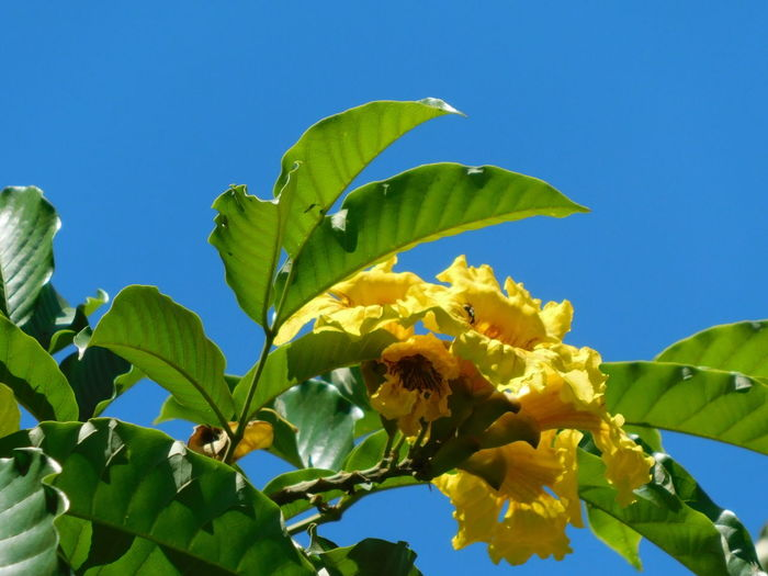 Leaf Blue Green Color Low Angle View Nature Plant Growth No People Fruit Agriculture Sky Outdoors Food Day Flower Healthy Eating Tree Beauty In Nature Freshness Azure Sky Yellow Flowers Clear Sky Cloudless Sky Perspectives On Nature