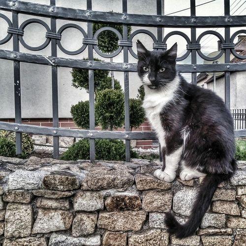 I see you... Cat Catoholic Catlovers Insta_cat ig_cat animal insta_beauty few_colors lubie_polske mobilnytydzien vscogood vscopoland vsco loves_Poland loves_cat cat_loves