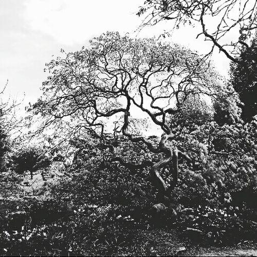 Wonderful chance. Tree Baum China Growth Growing Wachstum Wachsen Nature Natur Blackandwhite Schwarzweiß