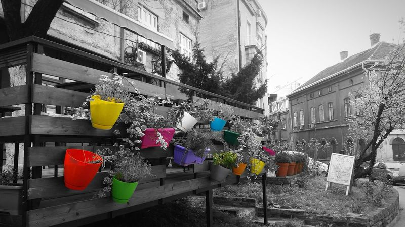 Architecture Building Exterior Hanging No People Multi Colored Colors Nature Belgrade,Serbia Autumn Architecture Scenics Vacations Flower Pot Flowers Flowers,Plants & Garden Bw Colorful Detail Artsy Urban Urban Geometry Edited Outdoors City Concrete