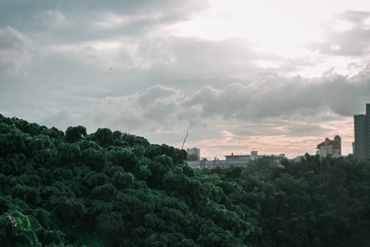 cloud - sky, sky, architecture, built structure, building exterior, nature, tree, plant, green color, growth, no people, outdoors, day, building, city, beauty in nature, overcast, travel destinations, environment