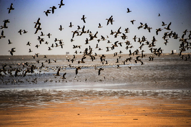 Large Group Of Animals Flying Bird Animal Themes Flock Of Birds Animals In The Wild Animal Wildlife Nature Outdoors Migrating Beach Motion No People Day Sky Beauty In Nature Togetherness NamibiaPhotography Namibian Namibia Namib Desert Namibia Swakopmund Beachphotography Birds Birds In Flight