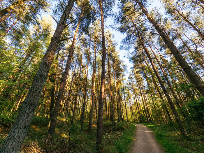 Beauty In Nature Bornholm Day Denmark Forest Growth Landscape Lush - Description Nature No People Outdoors Scandinavia Scenics Sky Tranquility Tree Tree Area Tree Trunk WoodLand