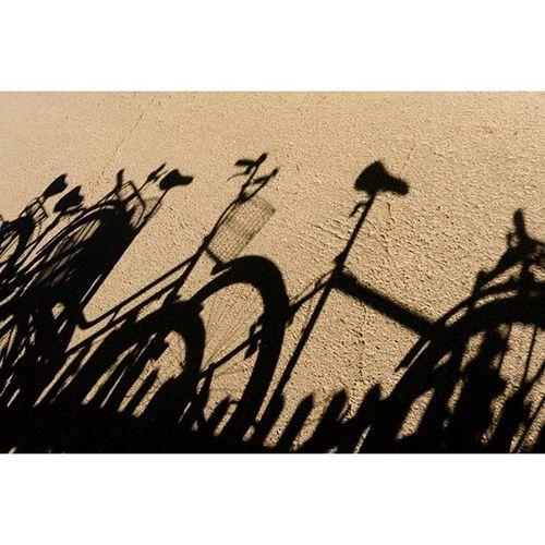 цветныекартинки солнечныедни светцветитень светотень