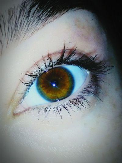 Human Body Part Human Eye Close-up Sensory Perception Eyelash Eyebrow Eyeball