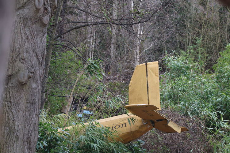 Airplane Airplane Tail Airplane Wreck Crashed Day Forest Jungle Land Nature No People Outdoors Rural Scene Tree Tree Trunk Wreck
