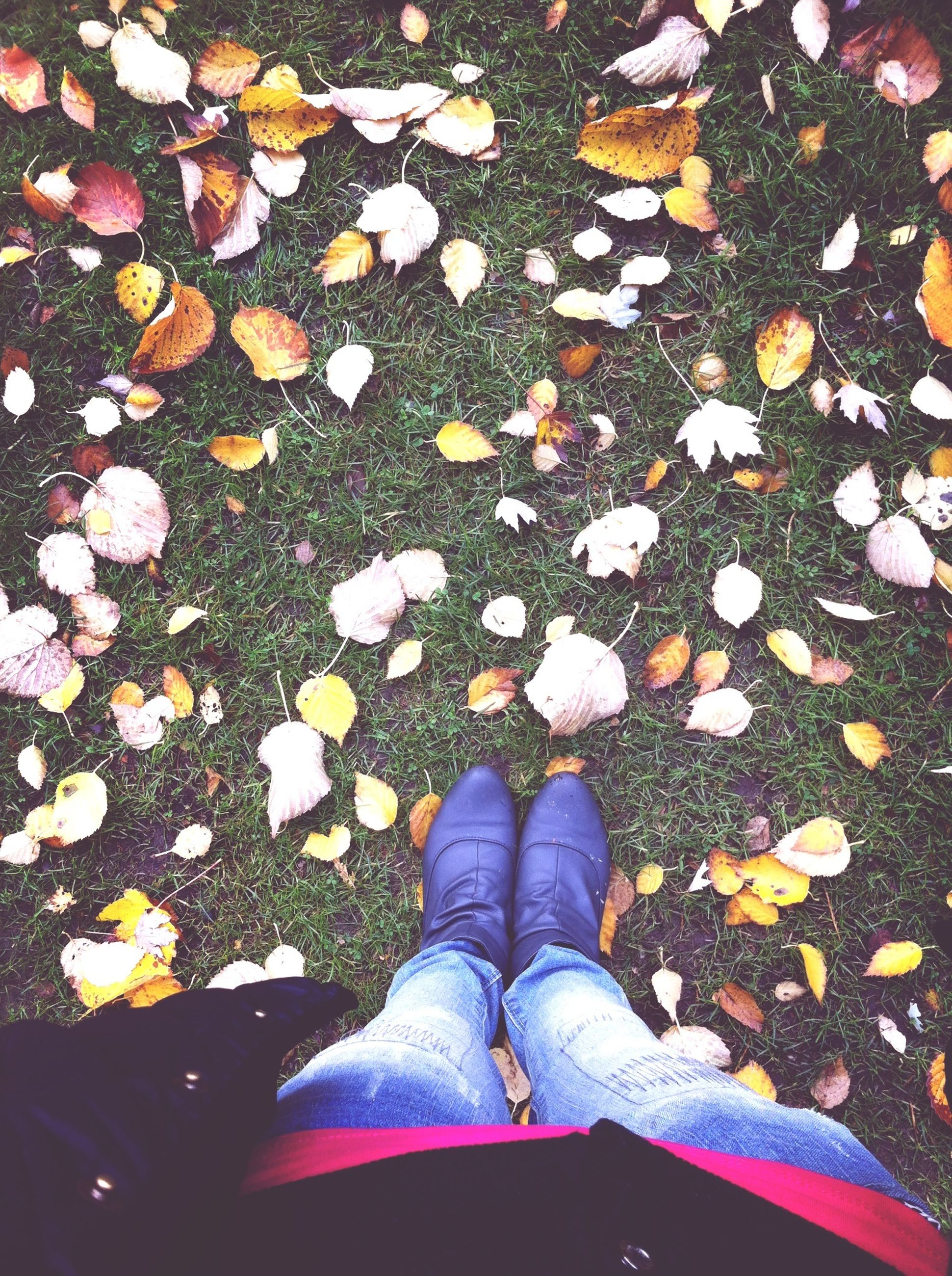 high angle view, low section, shoe, leaf, person, autumn, fallen, directly above, leaves, dry, abundance, flower, fragility, footwear, personal perspective, change, standing, season